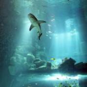 Aquarium de Paris – Cinéaqua